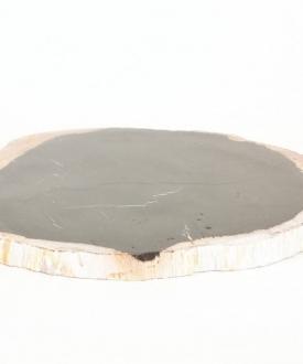 Petrified Wood Plate